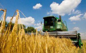 Попри несприятливі погодні умови на Прикарпатті, аграрії прогнозують добрий урожай…