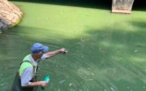 Як у Франківську очищують малі озера від синьо-зелених водоростей. ФОТО