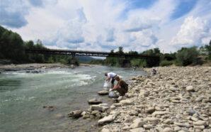 На Надвірнянщині у річку Прут випустили майже десять тисяч мальків…