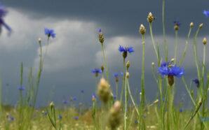 Україну накриють дощі та грози, а потім повернеться спека
