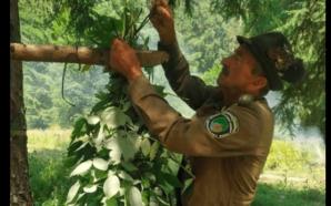 Прикарпатські лісівники заготовляють корми для диких тварин (ФОТО)