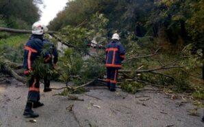 На Рогатинщині на дорогу впало дерево. ФОТО