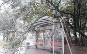 В Івано-Франківську негода повалила дерево на зупинку. ФОТО