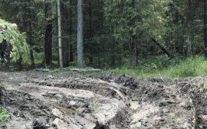 Як мешканці села на Рожнятівщині борються з вирубкою лісу