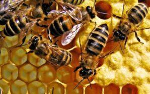 Бджолярі Прикарпаття можуть скористатися державною дотацією