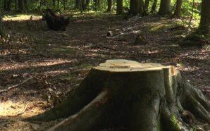 У передгір'ї Карпат зрубано 50 % лісу
