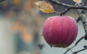 Якою буде погода в жовтні: синоптики дали прогноз