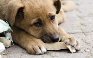 Франківські волонтери рятують безпритульних тварин від голоду та спраги. ВІДЕО
