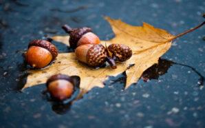 Синоптики дали прогноз на листопад