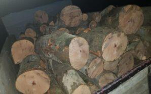 Прикарпатські поліцейські виявили незаконну рубку лісу і крадіжку деревини. ФОТО