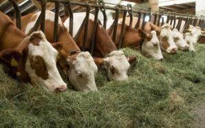 Аграрії Прикарпаття отримають часткове відшкодування вартості племінних генетичних ресурсів