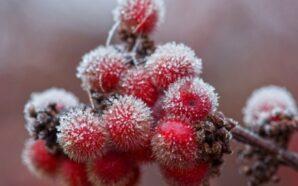 Синоптики попереджають про нічні морози