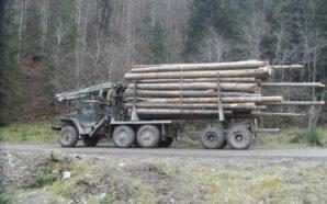 Прикарпатські поліцейські затримали вантажівку з деревиною. ФОТО