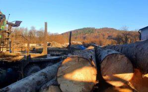 Прикарпатські поліцейські провели обшуки на території лісових господарств та приватних…