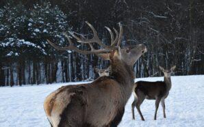 У мережі показали неймовірні світлини тварин у Галицькому нацпарку