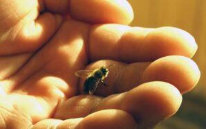 Карпатський мед отримає географічне зазначення. ФОТО