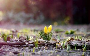 Синоптики розповіли, якою буде погода у березні