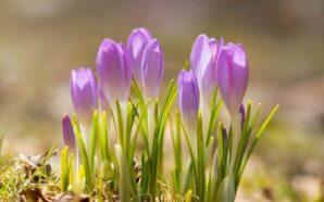 Народний синоптик дав прогноз на весну