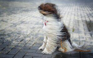 Дощ з мокрим снігом та сильний вітер: на Прикарпатті оголосили…