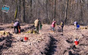 На Коломийщині висадили 2000 дубів