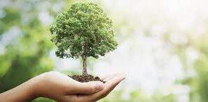 В Україні за три роки хочуть посадити мільярд дерев: Зеленський…