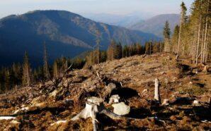 За незаконну вирубку лісу оголосили підозру майстрам